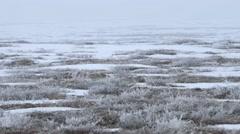 Male Rock Ptarmigan crossing frozen tundra. Pan Stock Footage