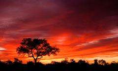 African sunset in the Kruger National Park - stock photo