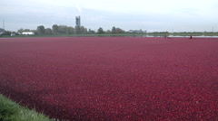 Flooded Cranberry Bog Ready for Harvest - stock footage