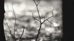 Silhouetted sapling. Rack - stock footage