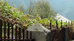 Tracking shot over fertile vines in Himalayan village Stock Footage