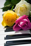 Background of yellow, pink, white roses on black and white piano key - stock photo