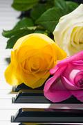 Background of yellow, pink, white roses on black and white piano key Stock Photos