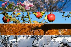 Four season collage - stock photo