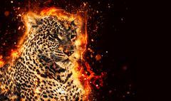 African leopard illustration - stock illustration