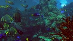 Large Aquarium colorful fish swimming - stock footage