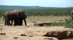 Elephants around the waterpool Stock Footage