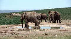 Big herd of elephants around the waterpool Stock Footage