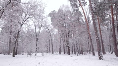 Fairytale winter wood. - stock footage