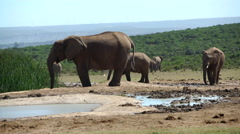 Elephants around a waterpool Stock Footage