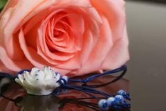 Large bud of fresh pink rose on dark glass - stock photo
