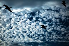 Stock Photo of Seagull Silhouette on the Cloudy Sky