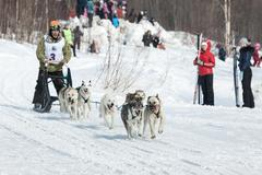 Musher runs dogsled on snowy track - stock photo