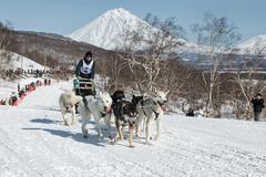 Dog team is running on snowy slopes on background of volcanoes Kuvituskuvat