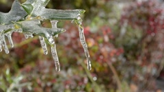 Branch and Leaf Encased in Ice after Winter Storm Stock Footage