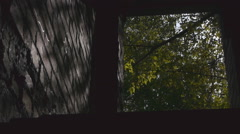 View From The Basement To The Forest Stock Footage
