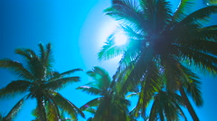 Low angle shot of palm trees with sun. Lens flare bursting through leaves.Fiji Stock Footage