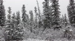 Driving in Snowstorm Blizzard in Alaska Taiga Forest Stock Footage
