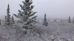 Driving Shot of Alaska Taiga and Tundra in Winter Snow - stock footage