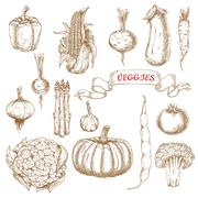 Stock Illustration of Farm egetables sketches from autumn harvest