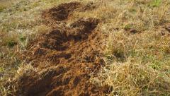 Hog Crop Damage Stock Footage