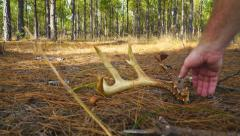 Whitetail Deer Antlers Stock Footage