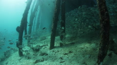 Schooling Fish Beneath Pier - stock footage