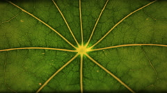 Extreme close up of a leaf wilting Stock Footage
