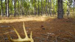 Whitetail Deer Antlers Stock Footage