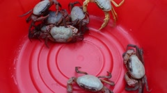 crab in the red bucket, crabs in mesh bags - stock footage