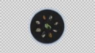 Stock Video Footage of Growing and rotating beans, 4K with ALPHA channel