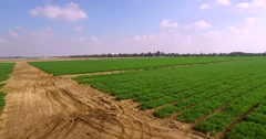 Israeli agriculture green field Stock Footage