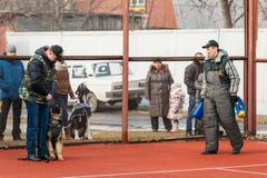 German shepherd dog training. Bitting dog - stock photo