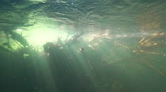Solar rays penetrate and illuminate underwater sunken branches spectacular Stock Footage