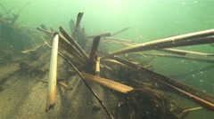 Stems of reeds swaying in slow motion underwater over the bottom of the river Stock Footage