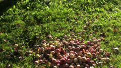 Rotting apple heap in countryside on sunny morning Stock Footage