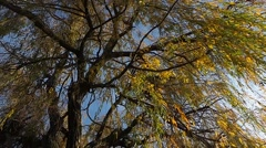 Leaves on the tree in french campaign Stock Footage