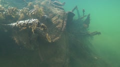 Stock Video Footage of underwater formations from algae and branches of submerged tree in river