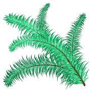 Twig of evergreen - stock illustration