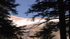 Mountain cedar forest Stock Footage