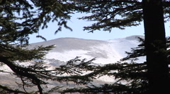 Mountain zoom out Cedar Forest Stock Footage