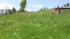 Dandelion field with white and yellow flowers and green grass 96 Stock Footage