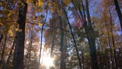 Beehives in autumnal forest Stock Footage