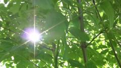 Sunshine illuminating the dark foliage of the forest 44 - stock footage