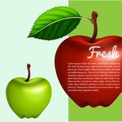 Poster design with fresh apples - stock illustration