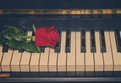 Red rose  on piano Stock Photos