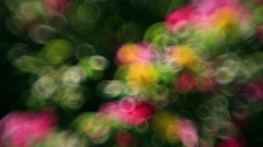 Colored bubbles of defocused flowers, waving on green foliage background Stock Footage