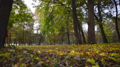 Lady in red walk through autumn park 4K  Stock Footage