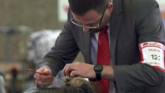Man grooming his Yorkshire terrier for dog show Stock Footage