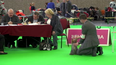 Dog being judged at dog show Stock Footage